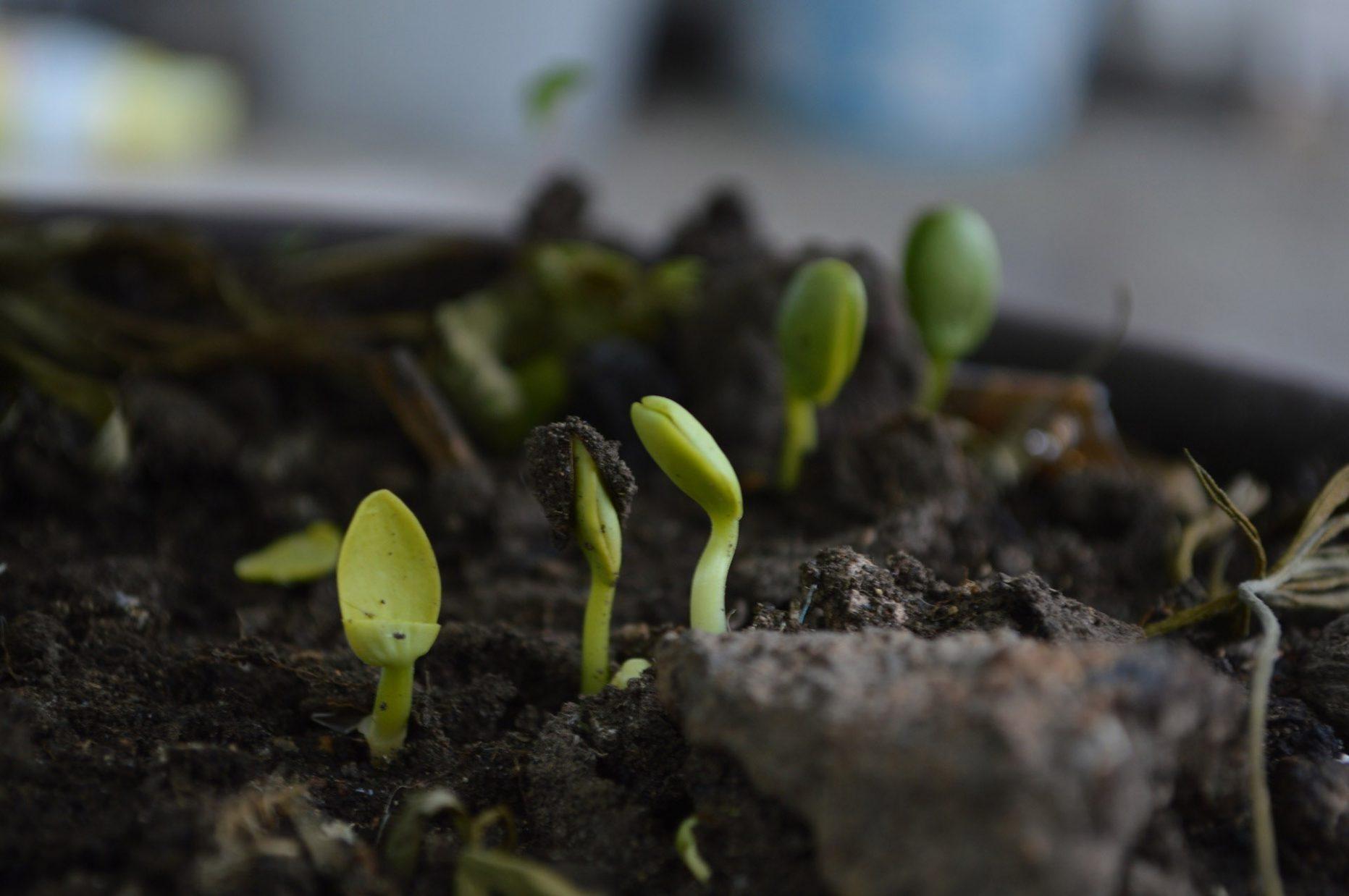 nature germe pousse plante
