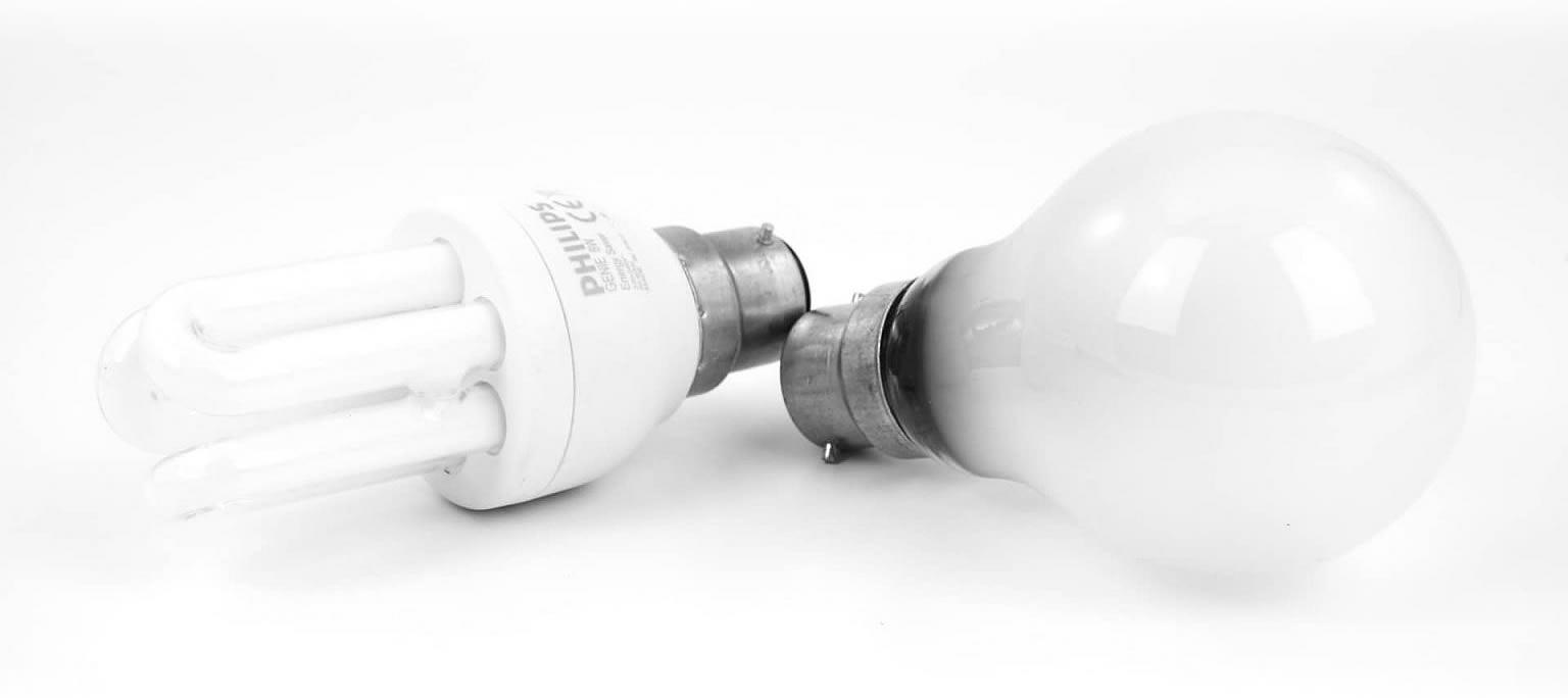 Recyclage des ampoules électriques avec Cèdre